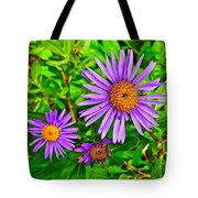 Subalpine Daisy By Vidae Falls In Crater Lake National Park-oregon  Tote Bag