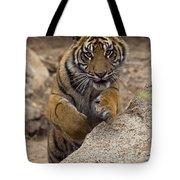 Sumatran Tiger Cub Jumping Onto Rock Tote Bag