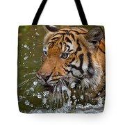 Sumatran Tiger Splashing In The Water Tote Bag