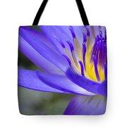 Summer Abundance Tote Bag