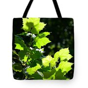 Summer Day's Light Tote Bag
