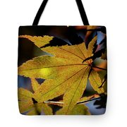 Summer Japanese Maple - 1 Tote Bag