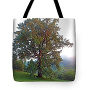 Summer Poplar Tree Filtered Tote Bag
