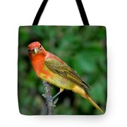 Summer Tanager Changing Color Tote Bag