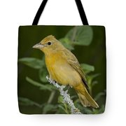 Summer Tanager Hen Tote Bag