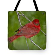 Summer Tanager Male Tote Bag