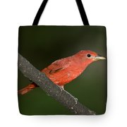 Summer Tanager Male Perched-ecuador Tote Bag