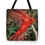 Summer Tanager Piranga Rubra Landing Tote Bag