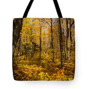 Sun Dappled Autumn Forest  Tote Bag