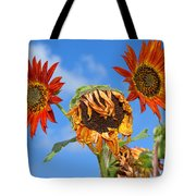 Sun Drenched In Autumn By Diana Sainz Tote Bag