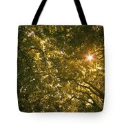 Sun In The Trees Tote Bag
