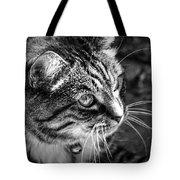Sun Kissed Kitty Tote Bag