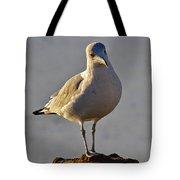 Sun-lit Gull Tote Bag