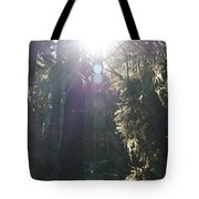 Sun Penetrates The Redwood Forest Tote Bag