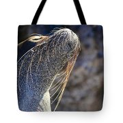 Sunbathing Galapagos Sea Lion Tote Bag