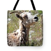 Sunbathing Mountain Sheep Tote Bag