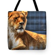 Sunbathing Lioness  Tote Bag