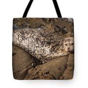 Sunbathing Sea Lion Tote Bag