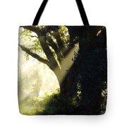 Sunbeam Tree Tote Bag