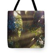 Sunbeams In The Tree Tote Bag