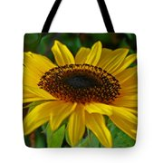 Sunflower Tote Bag by Daniele Smith