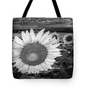 Sunflower Field Forever Bw Tote Bag