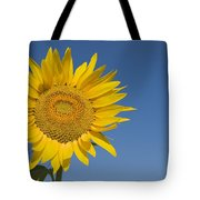 Sunflower, Helianthus Annuus Tote Bag