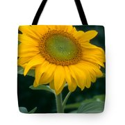 Sunflower In Seattle Tote Bag