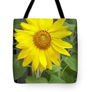 Sunflower Tote Bag by Lisa Phillips