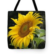 Sunflower Looking To The Sky Tote Bag
