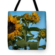 Sunflower Morning Tote Bag