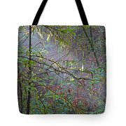 Sunlight Highlights In Armstrong Redwoods State Preserve Near Guerneville-ca Tote Bag