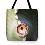 Sunlight Split On Cactus Knot Tote Bag