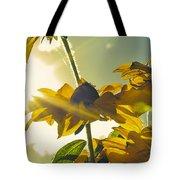 Sunlit Daisies Tote Bag