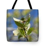 Sunlit Dogwood Blossoms Tote Bag
