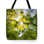 Sunlit Leaves Tote Bag
