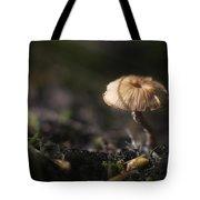 Sunlit Mushroom Tote Bag