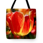 Sunlit Tulips Tote Bag by Rona Black
