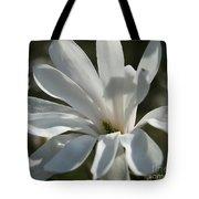 Sunlit White Magnolia Tote Bag