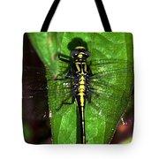 Sunning Dragon Tote Bag