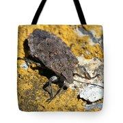 Sunning Stinkbug Tote Bag