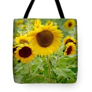 Sunny As Far As The Eye Can See Tote Bag