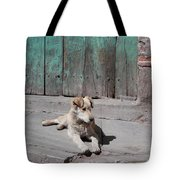 Dog Enjoying A Sunny Doorstep Tote Bag