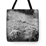 Sunny Gator Black And White Tote Bag