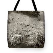Sunny Gator Sepia  Tote Bag