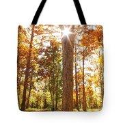 Sunny Hardwoods Tote Bag