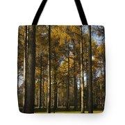 Sunny Larch Grove Tote Bag