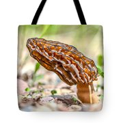 Sunny Morel Tote Bag