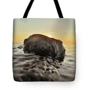 Sunrise Conch 9 10/3 Tote Bag
