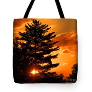 Sunset And Pine Tree  Tote Bag
